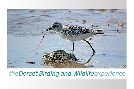 birding and wildlife experience